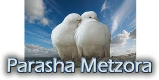 Parasha Metzora
