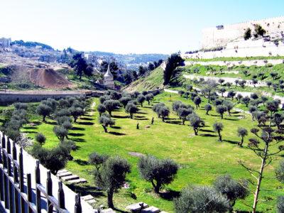 O significado profético do monte das oliveiras